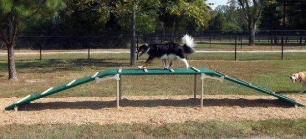 Dog Walk Dog Park 1