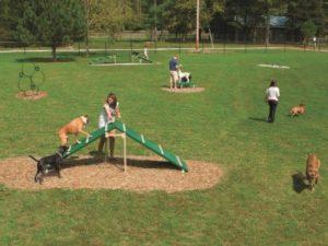 Expert Course Dog Park 1