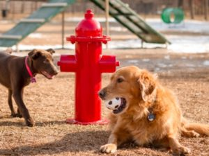 Fire Hydrant Dog Park 1