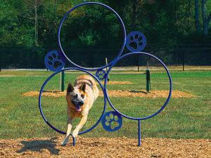 Hoop Jump Dog Park 1