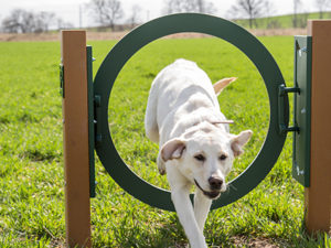 Recycled Adjustable Ring Jump Dog Park 1
