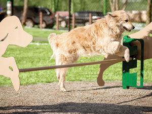 Rover Jump Over Dog Park 1