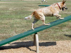 Teeter Totter Dog Park 1