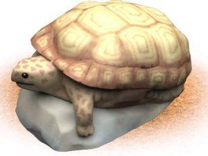 desert tortoise themed playground climber